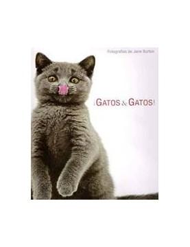 Gatos & gatos!